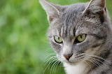 PImprenelle my cat 04