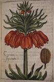 Cabinet des fleurs de Jean Franeau 11615 (4)