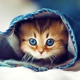 Kitty Hiding in Jeans...