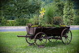 cart with flowers