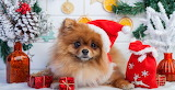 Dogs-at-christmas