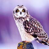 *Cute Owl...