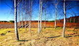 Birch Farm