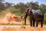 RIP Ndugu~May Your Spirit Watch Over the Orphans