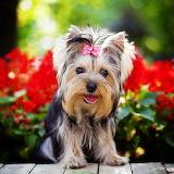 ☺So very, very cute!