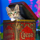 Sweet Tabby Kitten...