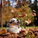 ☺ Cute puppy, Autumn fun...
