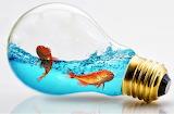 Fish in Light bulb