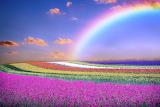 Spring, flower fields, sky, rainbow