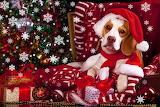 ☺♥ Cute Santa...