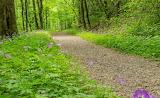 Mile 0417 Wild Petunia Trail