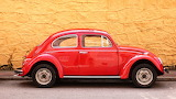 Red Beetle @ freeimages.com...