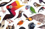 Birds Illustration (Brenden Wenzel)
