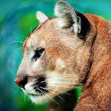 Beautiful Puma...