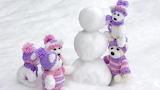 Snow Teddy bear