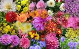 Nature--garden-autumn-flowers-
