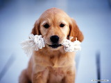 Puppy with toys