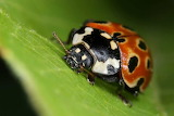 Different-types-of-photography-Macro-photography.jpg-700x467