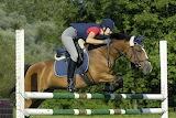 Equestrian sport horses