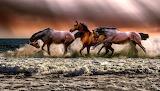 Horses 1280-2