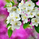* Spring Blossom...