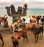 Group-dogs-pose-picture-together-animal-sanctuary-ecuador