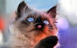 Мордочка котенка с язычком