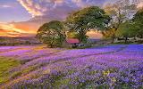 Flowery meadow, cottage, trees, hill, landscape