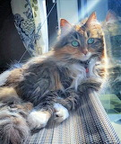 Green eyed cat at the window