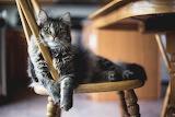 Dis My Chair Nao
