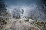 Frost-winter-road-forest-trees-nature-landscape