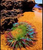 HiddenBeach Monterey