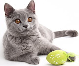 Cat with Green Egg
