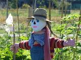 Scarecrow-