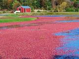 #Cranberry Bog
