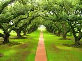 Green-nature-