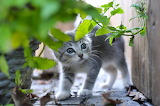 Kitten, grass, grey, baby, kitty, scared, leaves