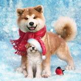 Christmas Pups @ 1zoom.me...