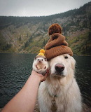 Dog and hedgehock with hats