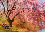 spring--sakura--a-beautiful-spring-day-mike-savad