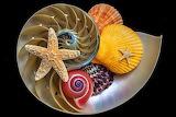 Nautilus&Shells