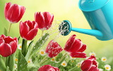 Tulips, watering can 3