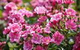 Flower garden plant (305)