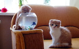 Fish-funny-kittens