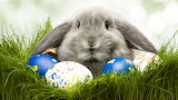 Hình nền con thỏ đẹp, dễ thương (10)