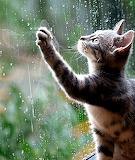 Rain Dance worked