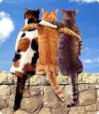 Cats - Best Friends