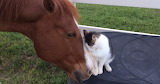 ^ Horse and cat friendship