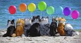 Dogs Balloon Party on Beach