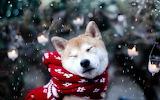 Christmas Inu